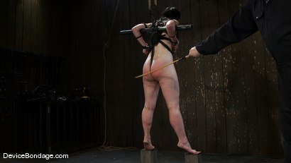 Photo number 8 from Maggie Mayhem <br>Balancing  shot for Device Bondage on Kink.com. Featuring Maggie Mayhem in hardcore BDSM & Fetish porn.