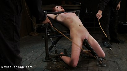 Photo number 14 from Love your cane marks. shot for Device Bondage on Kink.com. Featuring Lilla Katt in hardcore BDSM & Fetish porn.