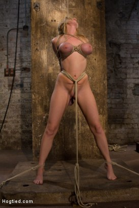 Photo number 15 from ANGELIC SUFFERING  shot for Hogtied on Kink.com. Featuring Madison Scott in hardcore BDSM & Fetish porn.