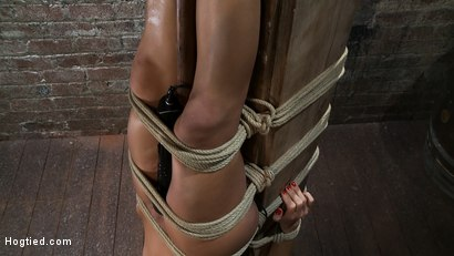 Photo number 3 from There's something you   Don't see everyday. shot for Hogtied on Kink.com. Featuring Gia DiMarco in hardcore BDSM & Fetish porn.