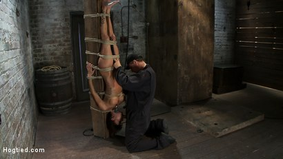 Photo number 8 from There's something you  Don't see everyday. shot for hogtied on Kink.com. Featuring Gia DiMarco in hardcore BDSM & Fetish porn.